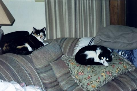 lazycats.jpg
