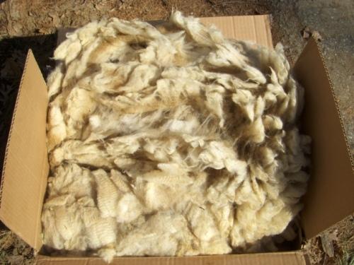 CA Fleece